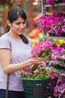 Woman choosing pink flower in garden center
