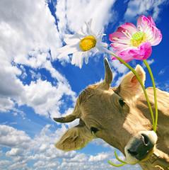 Geburtstag: Kuh schenkt Blumen