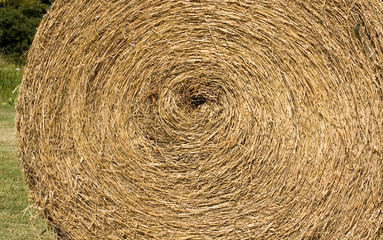 Roll of Straw