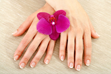 Female hands with wild purple orchid.