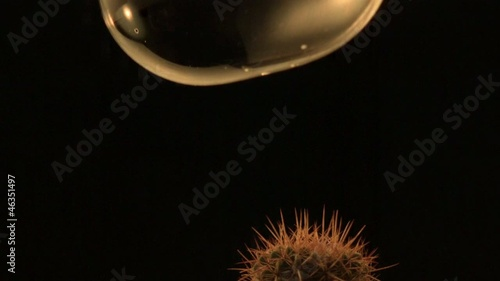 A soap bubble falling onto cactus spines and pops (slow motion)
