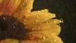 Water drops falling onto sunflower (slow motion)