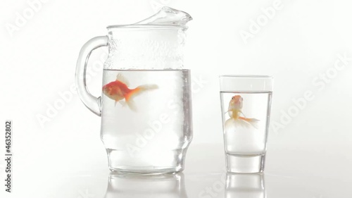 Goldfish swimming in pitcher and glass