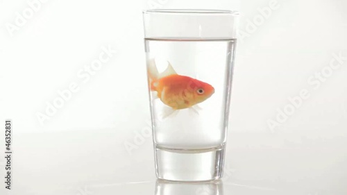 Goldfish swimming in glass