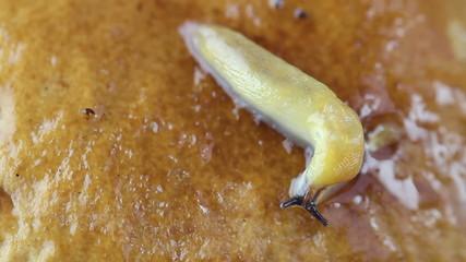 slug crawls on fungus closeup