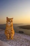Fototapeta koty - grecja - Inne