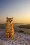 Fototapete Kätzchen - Griechenland - Andere