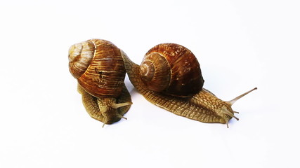 two snails crawl on a white background