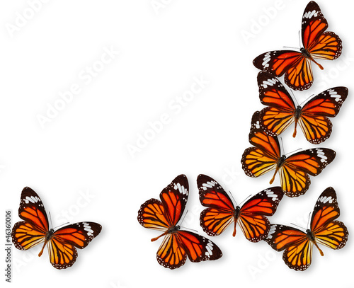 Colorful background butterfly