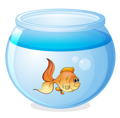 a fish and a bowl