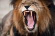 Fototapeten,afrika,agression,angriffslustig,wut