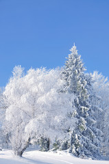 Winter mit Rauhreif im Bayerischen Wald
