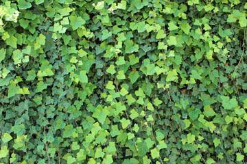 Green Creeper Texture