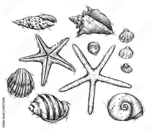 Sea Snail Drawing of Sea Shells Drawings