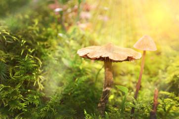 Märchenhafter Waldboden
