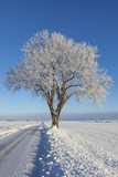 Solitary winter tree on  a roadside