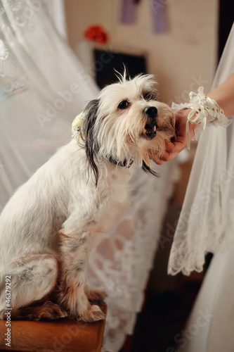 white shaggy dog stroking a woman's hand