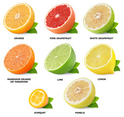 Citrus fruits collection