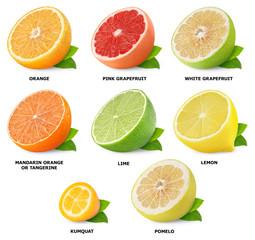 Citrus fruits collection