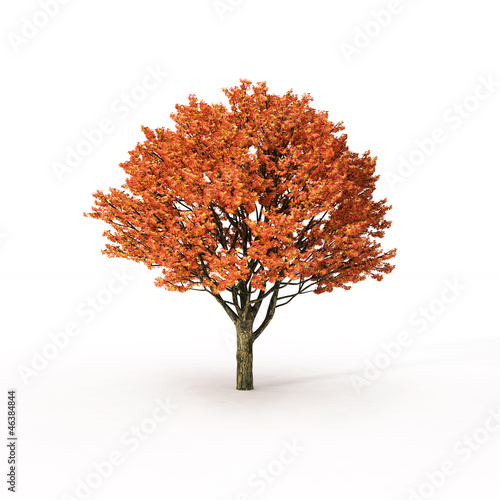 autumn tree on white