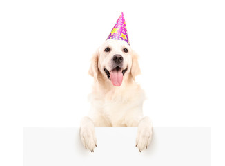 Labrador retriever with party hat posing on a panel
