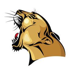 Cougar head - vector illustration