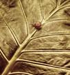 Little snail on green leaf