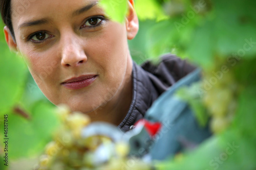 Woman pruning vine