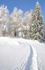 Winterwald mit Rauhreif im Bayerischen Wald