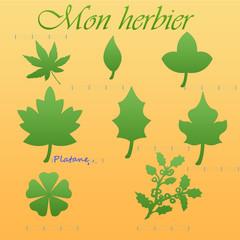 Mon herbier (enfance)