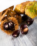 Chestnuts eatable  poster
