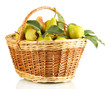 Juicy flavorful pears in basket isolated on white