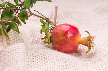 Small pomegranate