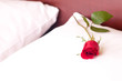 Red rose on a white pillow
