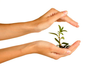 woman's hands are holding a money tree