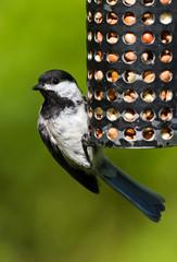 Chickadee and Bird Feeder