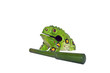 The green artificial Toad Chinese Feng Shui lucky money frog