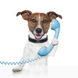 dog on the phone talking