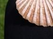 Muschel auf dem Bein