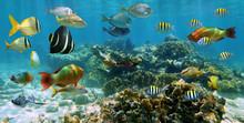 Panorama i ett korallrev med fiskstim