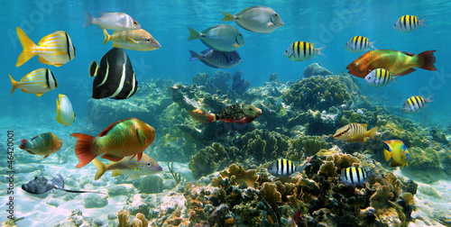Panorama in a coral reef with shoal of fish