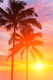 Fototapety Two palm and beautiful sunset