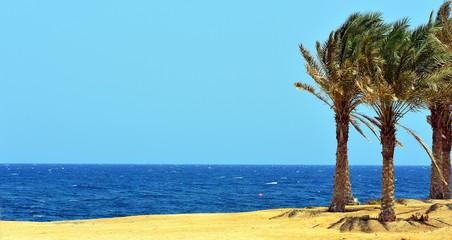 palme e mare a marsa alam