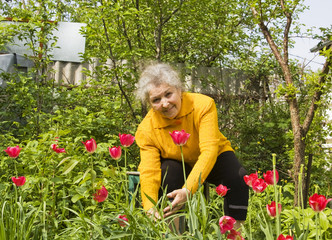 Old lady with red tulips