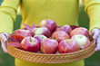 Woman holding tray with autumn apples, shallow dof