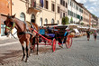 Horse and coach waiting at Piazza Navona