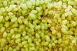 Viele grüne Weintrauben