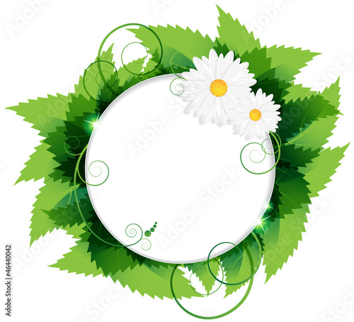 Daisies With Leaves