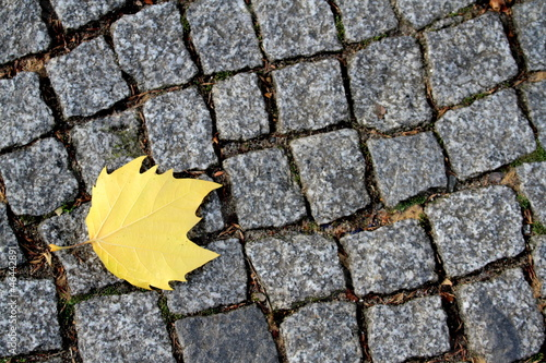Road paving stones and yellow leaf. Autumn concept.