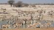 Zebra, springbok and gemsbok, Etosha National Park